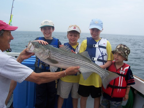 Big Striped Bass